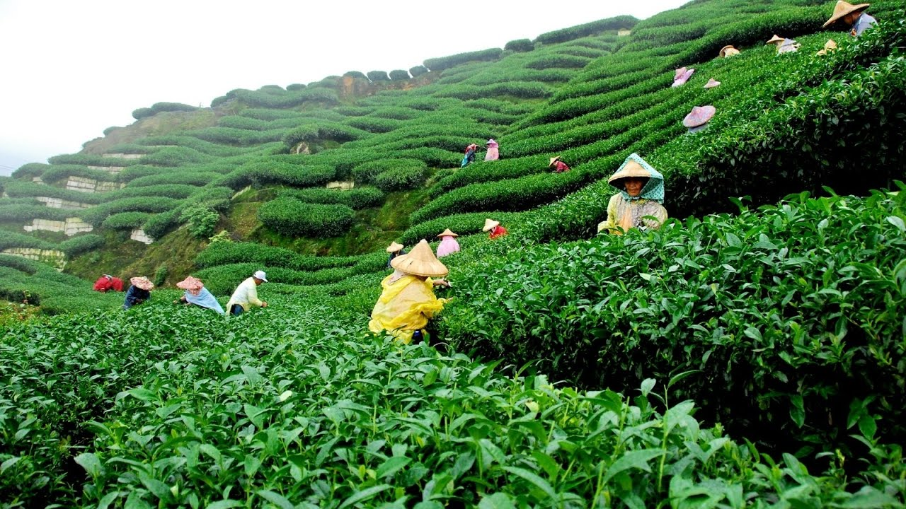 New Tea Auction Center opens in Sreemangal