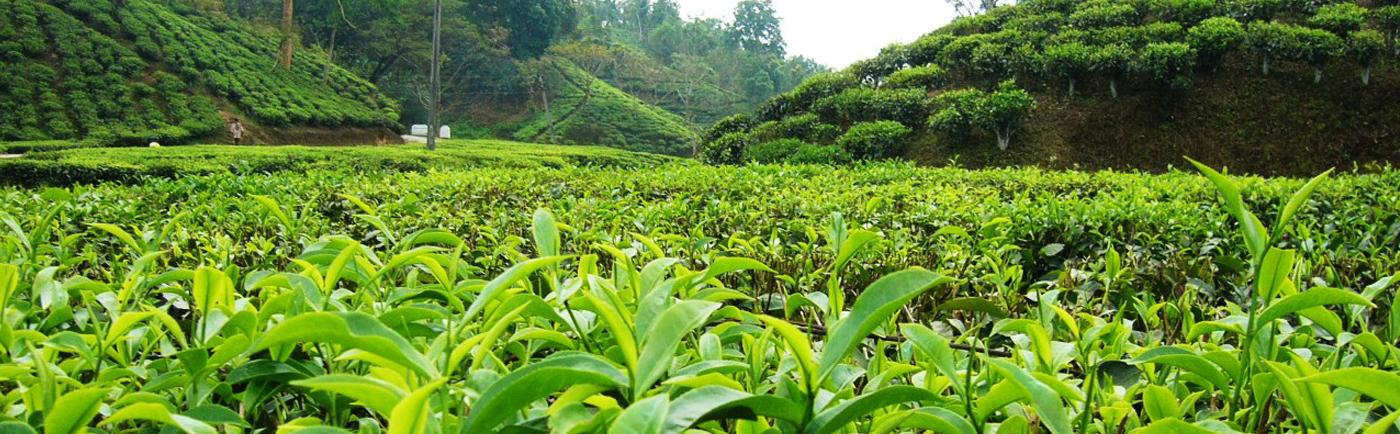 Tea Traders Association of Bangladesh (TTAB)